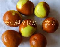 果园现摘山东鲜梨枣产地代购代办