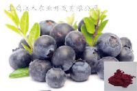 果粉厂家直销 蓝莓果粉  水溶 蓝莓果汁粉