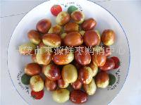 鲜金丝红枣产地批发价格