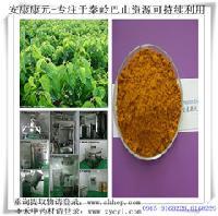 天然无公害降糖原料桑叶提取物生物碱和黄酮