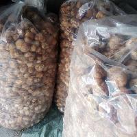 猴头菇 野生菌猴头菇 500g/袋