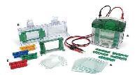美国Bio-Rad Mini-Protean小垂直板电泳槽-食品分析