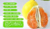 金桔蜜柚2个装 平和蜜柚 琯溪蜜柚 产地直销