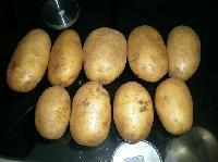 费乌瑞它脱毒马铃薯种子