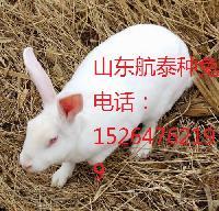 全国獭兔价格行情2015年獭兔养殖前景