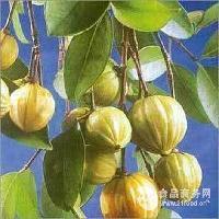 藤黄果提取物 HCA60%