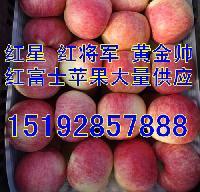 红星苹果产地价格