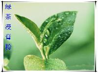 绿茶速溶纯粉