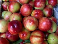 今日大棚油桃价格最新油桃批发价格查询详细