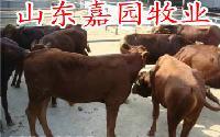 2016出售肉驴价格