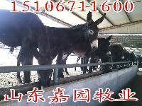 哪里有肉驴养殖场