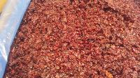 美国进口优质蔓越莓 粒 丁