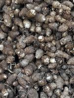 山东芋头上市批发价格