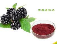 天然黑莓提取物,厂家直销,现货包邮!