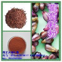 葡萄籽提取物 原花青素98% 葡萄籽原花青素