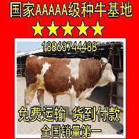 2016年牛的价格怎么样