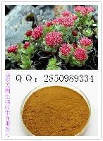 红景天提取物 红景天苷1%