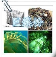 巨藻粉,厂家直销,特价供应,现货包邮!