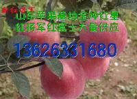 纸袋红星苹果价格鹤岗市场纸袋红星苹果价格行情