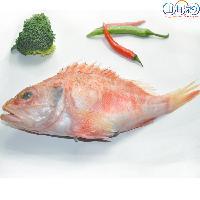 进口海鲜 新西兰红鲈鱼