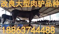 养殖肉驴需注意哪些问题