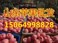 河北红富士苹果产地