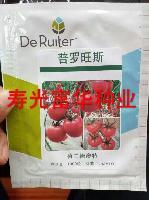 荷兰德奥特普罗旺斯番茄种子