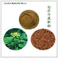 基地生产 品质保证 白芥子提取物 棕黄色精细粉末 10:1