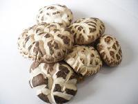 自产干香菇新鲜香菇脱水干制特价食用菌