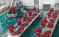红枣汁饮料生产线/红枣整线加工设备