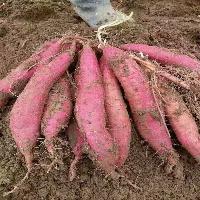 红薯粉速溶味纯味美