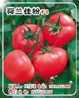 荷兰佳粉F1双抗粉果番茄种子—耐裂硬粉番茄种子