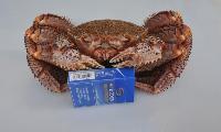 长期供应红毛蟹