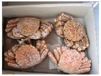 长期供应冻毛蟹