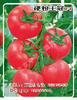 硬粉王冠F1番茄种子-越冬、早春、秋延粉果番茄种子