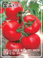 金玉X3F1精品果番茄种子—越夏抗病番茄种子