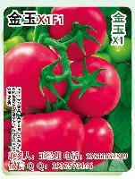 金玉X1F1粉果番茄种子 早春越冬大果番茄种子