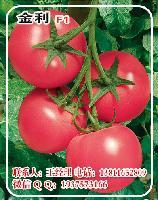 金利F1硬粉番茄种子A番茄种子批发