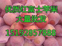 最新辽宁营口红富士苹果批发价格 辽宁省苹果批发价格