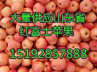 优质红富士苹果批发价格 今年山东省苹果价格