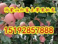 安徽合肥红富士苹果价格 安徽省苹果批发价格