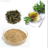 茶多酚98%  绿茶提取物厂家  批发价格