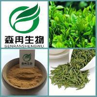 天然萃取 苦茗提取物 绿茶提取物10:1 1kg起订