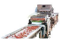 毛菜水果挑选分检加工清洗生产线