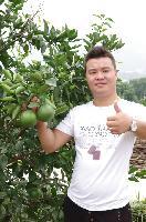 树友苗木 美国新品种 威诺葡萄柚新品种大量供货中