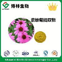紫锥菊提取物 菊苣酸20:1(%) 现货包邮