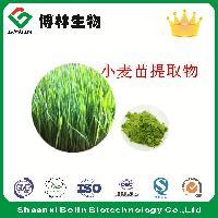 小麦苗提取物 小麦苗多糖30:1 现货供应