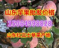 2018年山东省红富士苹果价格行情