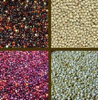 藜麦种子批发 国产 宁夏白藜麦米价格