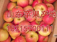 现在嘎啦苹果价格多钱一斤2018年嘎啦苹果批发价格大概一斤多钱?
